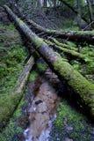 Un bosque viejo Imagenes de archivo