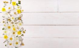 Un bouquet de cosmea ou de cosmos de fleurs blanches avec le ruban sur les conseils blancs Fleurs jaunes de jardin au-dessus de b Image libre de droits