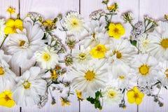 Un bouquet de cosmea ou de cosmos de fleurs blanches avec le ruban sur les conseils blancs Fleurs jaunes de jardin au-dessus d'en Photo stock