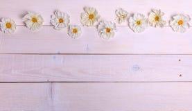 Un bouquet de cosmea ou de cosmos de fleurs blanches avec le ruban sur les conseils blancs Fleurs jaunes de jardin au-dessus d'en Images libres de droits