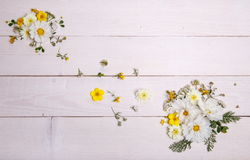 Un bouquet de cosmea ou de cosmos de fleurs blanches avec le ruban sur les conseils blancs Fleurs jaunes de jardin au-dessus d'en Photos stock