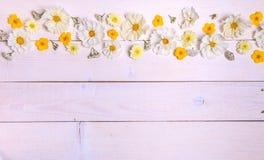 Un bouquet de cosmea ou de cosmos de fleurs blanches avec le ruban sur les conseils blancs Fleurs jaunes de jardin au-dessus d'en Image libre de droits