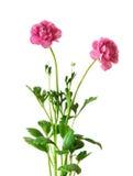 Un bouquet de fleur Photographie stock