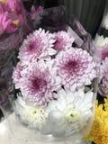 Un bouquet de fleur de chrysanthème Images libres de droits