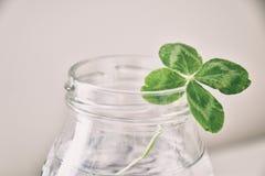 Un bouquet de l trèfles à quatre feuilles de champ dans un petit vase sur un ligh Photos stock