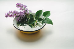 Un bouquet de lilas pourpre frais en jaune a émaillé la cuvette Photos libres de droits