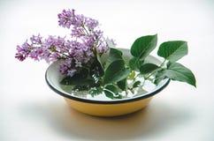 Un bouquet de lilas pourpre frais en jaune a émaillé la cuvette Image stock