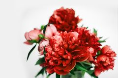 Un bouquet de rose lumineux et de pivoines luxuriantes rouges photos stock