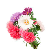 Un bouquet des asters Photographie stock