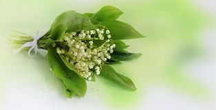 Un bouquet des lis de la vallée avec des baisses sur un fond vert mou Photos libres de droits