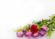 Un bouquet des roses Images stock