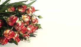 Un bouquet des roses, du jaune et du rouge sur un fond blanc Images stock