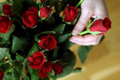 Un bouquet des roses rouges Photographie stock libre de droits