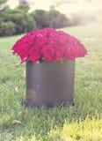 Un bouquet des roses rouges dans une boîte Image libre de droits