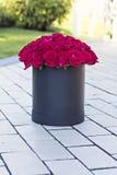 Un bouquet des roses rouges dans une boîte Images libres de droits