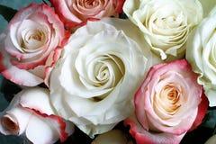 Un bouquet des roses sur le fond vert clair Photographie stock