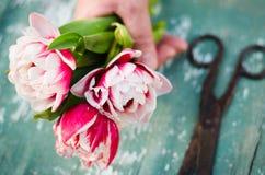 Un bouquet des tulipes dans une main du ` s de femme Photos stock