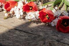 Un bouquet des tulipes et des branches rouges des fleurs blanches sur de vieux conseils en bois Place pour le texte Le concept du photographie stock libre de droits