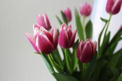 Un bouquet des tulipes roses Photographie stock libre de droits