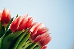 Un bouquet des tulipes roses fraîches sur un fond de ciel bleu Groupe de fleurs photos libres de droits