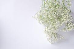 Un bouquet du gypsophila blanc sur un fond blanc photographie stock libre de droits