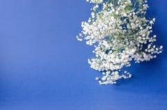 Un bouquet du gypsophila blanc sur un fond bleu photos libres de droits