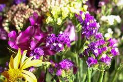 Un bouquet merveilleux des fleurs sauvages pourpres et jaunes Petites fleurs de champ wildflowers blancs dans un bouquet cloches  images libres de droits