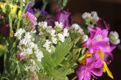 Un bouquet merveilleux des fleurs sauvages pourpres et jaunes Petites fleurs de champ wildflowers blancs dans un bouquet cloches  images stock