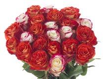 Un bouquet spectaculaire sur un fond blanc images libres de droits