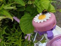 Un bourdon se reposant sur une cloche de vélo de fleur de marguerite de prise photographie stock