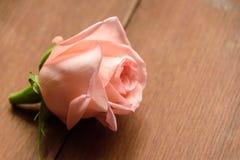 Un bourgeon d'un rose s'est levé Photo libre de droits