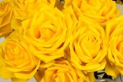 Un bourgeon d'un rose s'est levé Images libres de droits