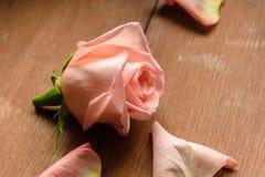 Un bourgeon d'un rose s'est levé sur un en bois Photographie stock