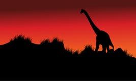 Un brachiosaurus dans les domaines au matin Images stock