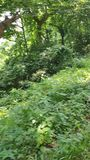 Un breve video di un'avventura della giungla video d archivio