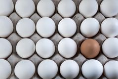 Un brun d'oeufs dans les oeufs blancs, minorité visible Photos stock