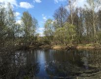 Un buen día soleado en la primavera, en el bosque ruso imagenes de archivo