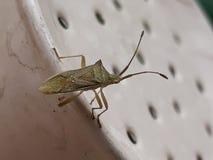 Un Bug& x27; vida de s Imagen de archivo libre de regalías