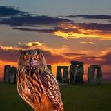 Un buho y el misterio Stonehenge Fotos de archivo libres de regalías