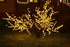 Un buisson dans les ampoules la nuit Photos libres de droits