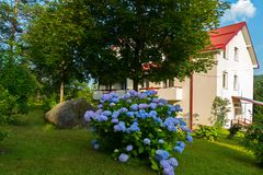 Un buisson magnifique des fleurs sur une pelouse verte s'élevant près de la maison avec un toit carrelé Images stock