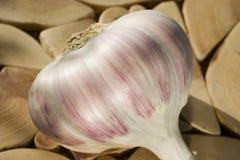 Un bulbo del ajo en un soporte del enebro Primer 1 foto de archivo
