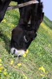 Un burro Foto de archivo libre de regalías