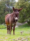 Un burro Fotos de archivo