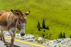 Un burro agradable en el camino foto de archivo libre de regalías
