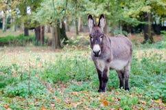 Un burro en un claro imágenes de archivo libres de regalías