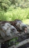 Un burro en el parque zoológico imágenes de archivo libres de regalías