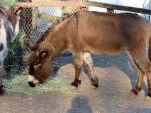 Un burro en un parque imágenes de archivo libres de regalías