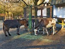 Un burro en un parque imagen de archivo