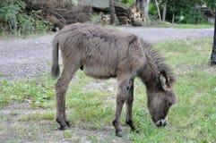 Un burro joven en un claro en el campo Foto de archivo